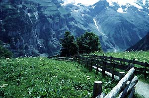 Swiss-Alps-walk